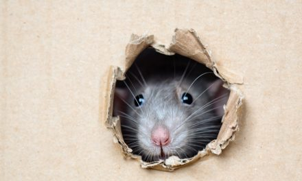 Signs You May Have A Rodent Problem
